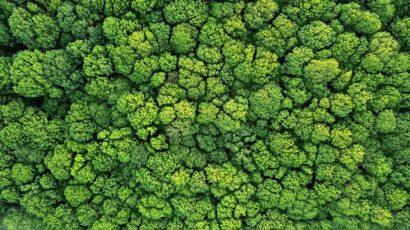 Hvad er egentlig greenwashing? I Definition af begrebet